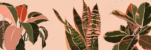 Obraz Art collage houseplant leaves in a minimal trendy style. Silhouette of sansevieria, Spathiphyllum and ficus plants in a contemporary simple abstract style on a pink background. Vector illustration - fototapety do salonu