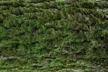 Green Moss On Tree Trunk Backg...