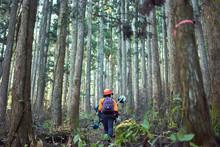 林業、森林で働く女性労働者