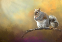 Squirrel Eating Peanut On Tree Limb