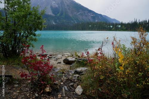 Fototapeta Lake and plants