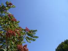 Spring Landscape. Flowering Pl...