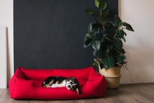 Cute Doggy Is Sleeping In Dog'...