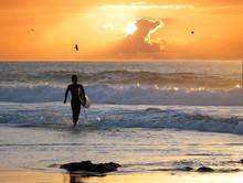 SILHOUETTE: Surfer Walking Int...