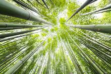 Kyoto, Japan Canopy Closeup Wi...