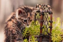 Gato En Cabaña