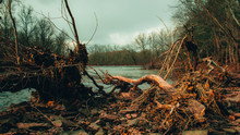 A Large Fallen Tree Branch Sur...