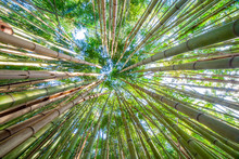 Bamboo Forest Sky