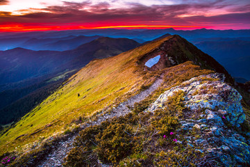 Fototapeta Góry colorful nature sunrise image, scenic morning dawn view on rocks in summer blomming pink flowers on background of mountains, wonderful floral summer landscape, Europe, Romania and Ukraine, Carpathians