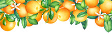 Fruit Design With Watercolor Orange Tree Branches