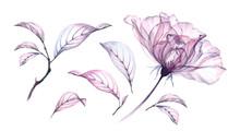 Transparent Watercolor Rose Fl...