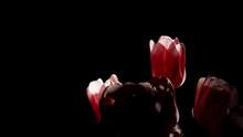 Pink Tulip Flower Bouquet Back...
