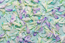 Floral Spring Background Of Pe...