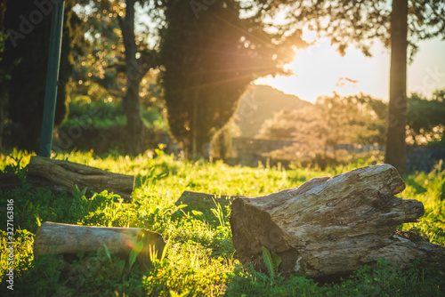Wonderful sunset with rays falling on the grass and wooden logs in the garden Canvas Print