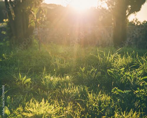 Photo Wonderful sunset in the green garden
