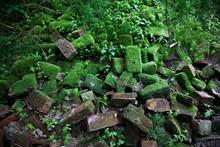 Stary Zawalony Mur Z Cegieł Porośnięty Mchem I Leśną Roślinnością