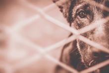 Dog Abandoned And Caged