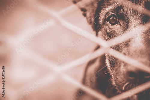 Dog abandoned and caged Canvas Print