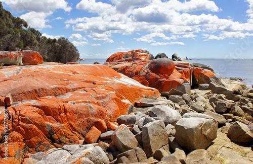 Bay of Fires, Tasmania, Australia Canvas Print