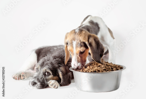 Photo shaggy puppy mongrel with a bowl of dry food