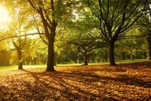 Sunlit Autumn Scene In The Park.