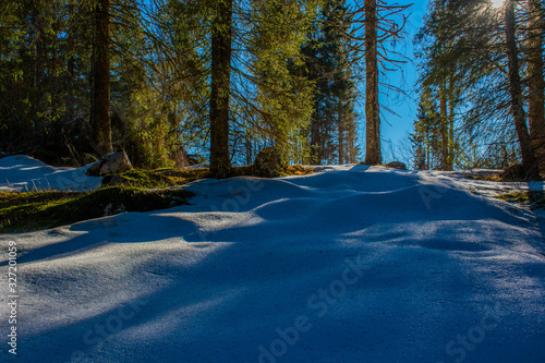 snow and forest Wallpaper Mural