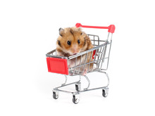 Fluffy Hamster Sitting In A Sm...