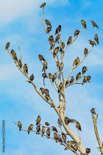 many birds on tree Canvas Print