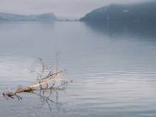 """View Of Lake """"Brienzersee"""", Switzerland With Tree At Dusk"""