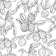 Hand Drawn  Kaffir Lime (bergamot).   Vector  Seamless Pattern.