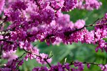 Pink Flowers In Garden Branch ...