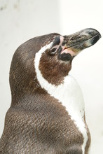 ペンギン,