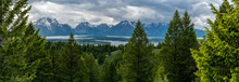 Panorama Of Trees In Front Of Jackson Lake And Tetons Range