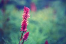 Beautiful Fairy Dreamy Magic P...