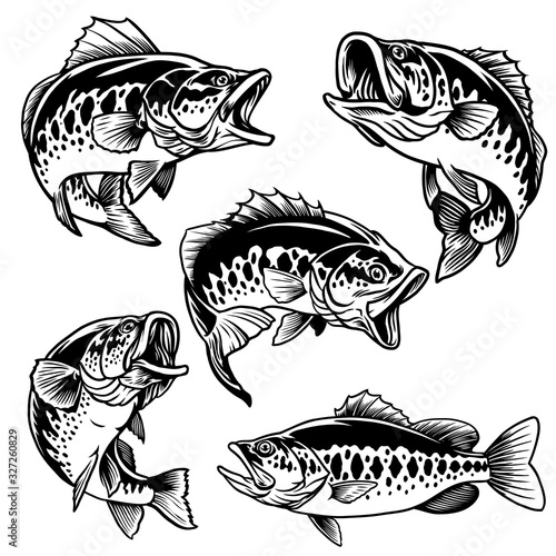 Fotografía set of black and white of largemouth bass fish