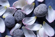 Tulip Petals And Pebbles On Gr...