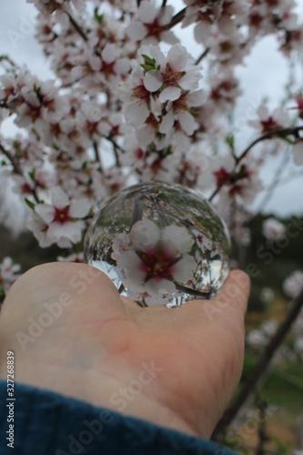 Vászonkép boule de cristal et fleur de cerisier