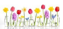 Spring Flower In Glass Vases