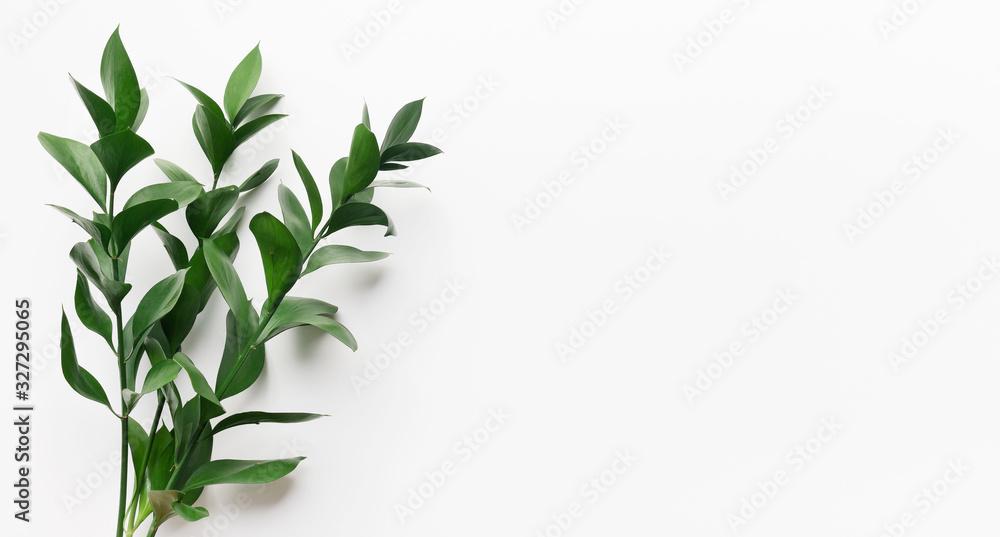 Fototapeta Green living plant branch on white background