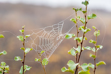 Spider Web Between Small Branches Covered In Small Water Droplets During Foggy Weather