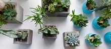 Succulents, Cactus, Haworthia ...