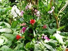 Plante Epiphyte Et Orchidées