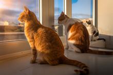 Tres Gatos Domesticos Contempl...