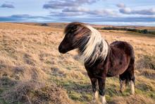 Isolated Pony On Dartmoor National Park