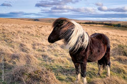 Photo Isolated pony on Dartmoor National Park
