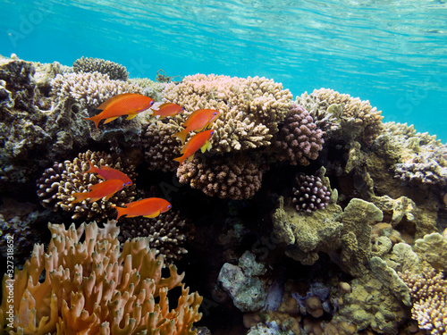 Colorful reef underwater landscape with fishes and corals Fototapeta