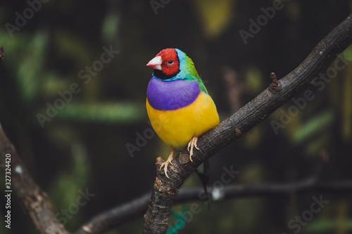 Photographie Beautiful colored bird sits on a tree branch