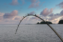 A Fishing Pole Bent With A Fis...