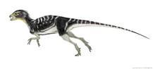 ヘテロドントサウルス...