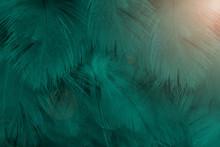 Beautiful Dark Green Colors To...